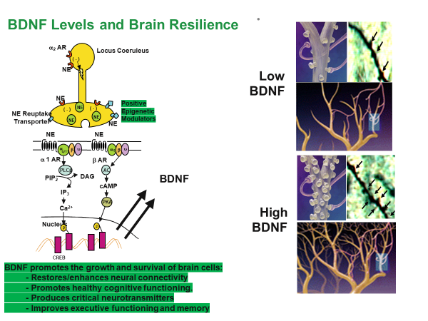 BDNF-Levels_Depression-Dosent-Exist